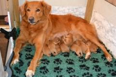 Alla 11 födda
