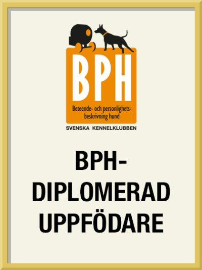 bph-diplomerad-uppf