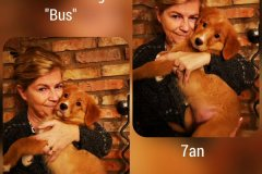 bus-anette