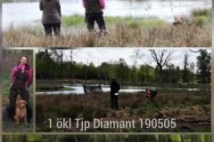 diamant-1okl-tjp-190505