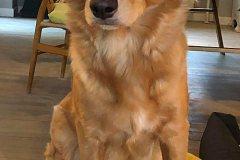 vega-sitter2-201230