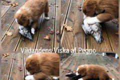 viska-and-7v
